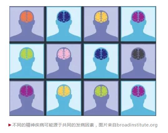 大规模全基因组分析,重塑对脑疾病的认知