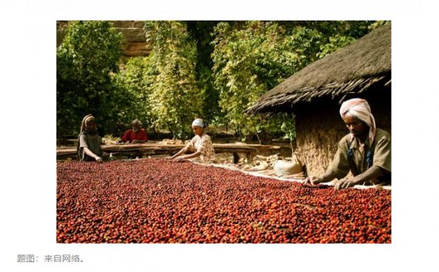 暗涌|第三章  埃塞俄比亚的咖啡