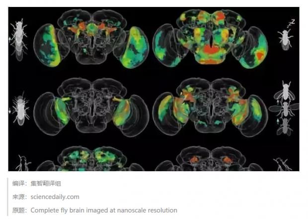 Cell最新:科学家成功绘制出完整的果蝇大脑神经网络!