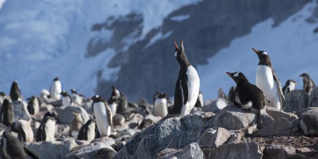 中欧能否携手推进南极保护?