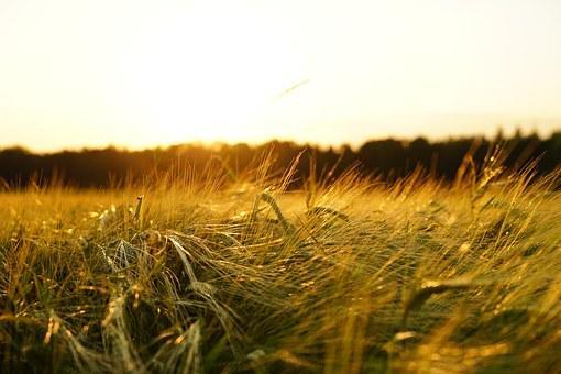 粮食危机有可能就在眼前,一个比高房租更麻烦的问题已经出现了?