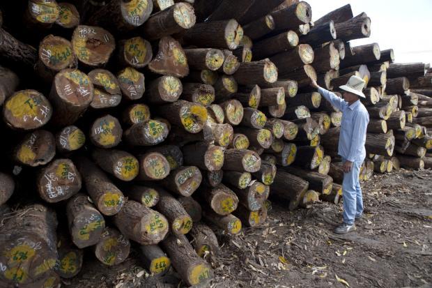 中莫双边协议能助莫桑比克实现可持续林业吗?