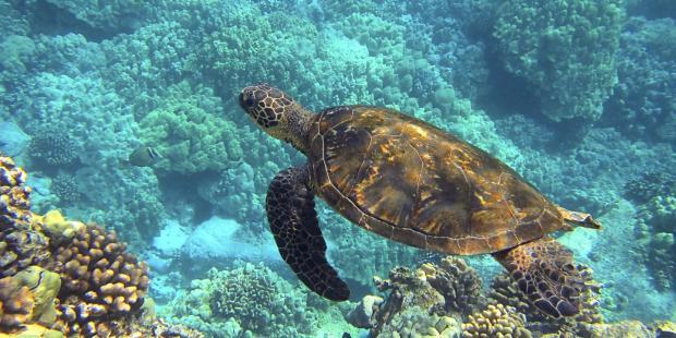 跨境贸易威胁海龟生存