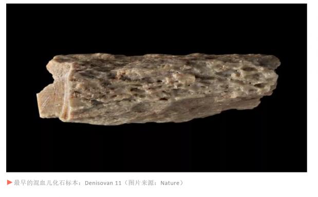 9万年前混血女孩被揭秘