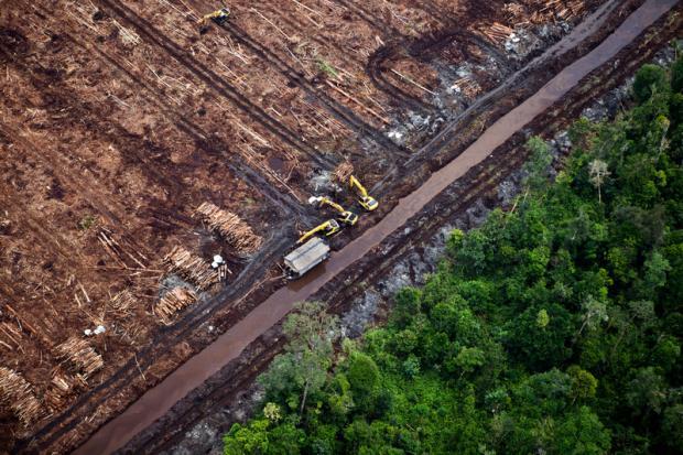 降雨减少:砍伐森林的间接后果不可小视