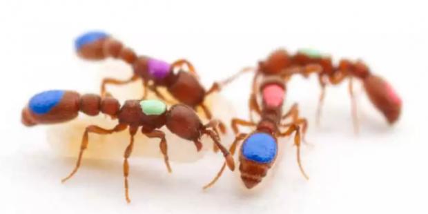 究竟是什么让工蚁任劳任怨,而蚁后坐享其成?