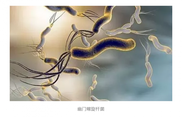 幽门螺旋杆菌疫苗——人们最期待的疫苗