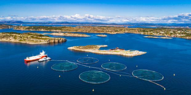 公海生物多样性谈判需解决机制性问题