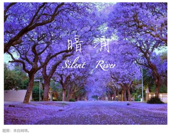 暗涌|第十八章 重返硅谷,又见蓝花楹