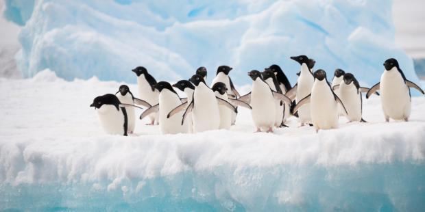南极未来悬于一线