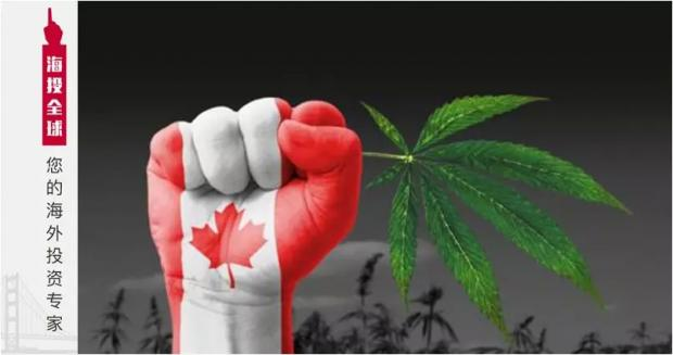 """《绝命毒师》""""占领""""加拿大:别以为和你没关系,一不小心,就可能毁掉一生"""