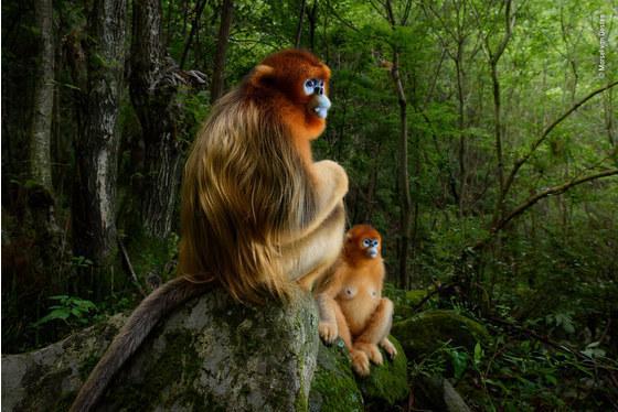 摄影大赛捕捉到的野生动物生存危机
