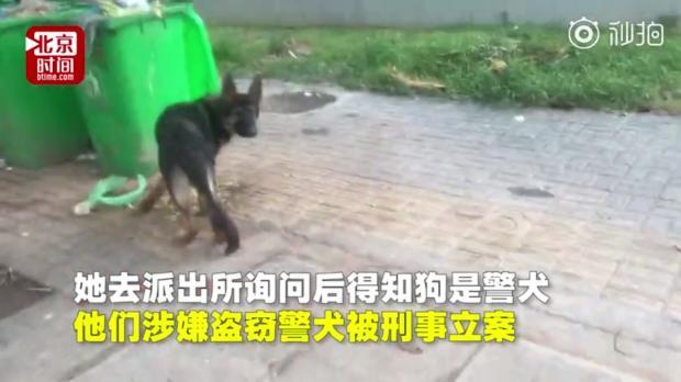 盗窃警犬还是救助流浪狗,警方最好能公布视频