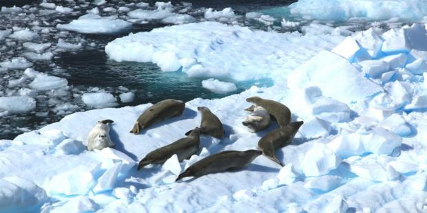 保护南极和地球,中国会投赞成票吗?