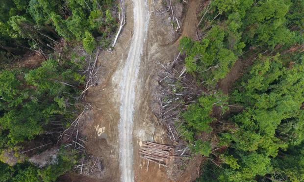 中国可助太平洋岛国实现森林可持续利用