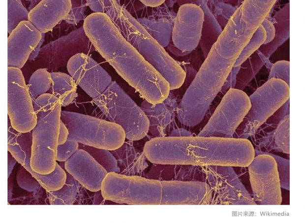 人脑中可能存在肠道细菌;网约车致美国交通致死率攀升? | 科学FM