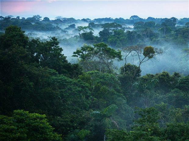原住民管理森林的百年经验