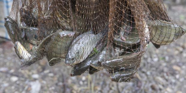 肯尼亚:中国进口鱼产品激辩