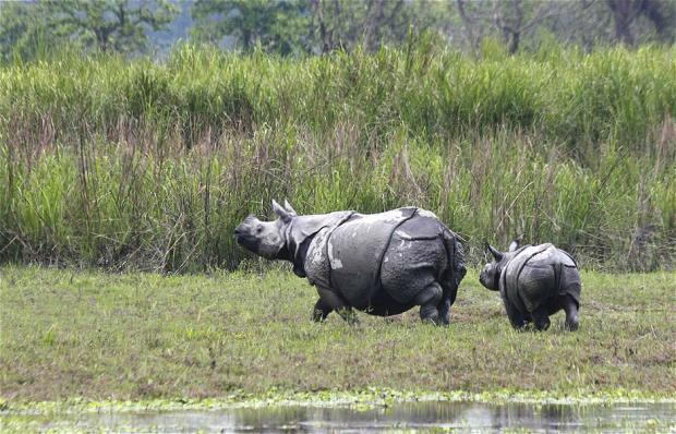 高科技助力野生动物保护