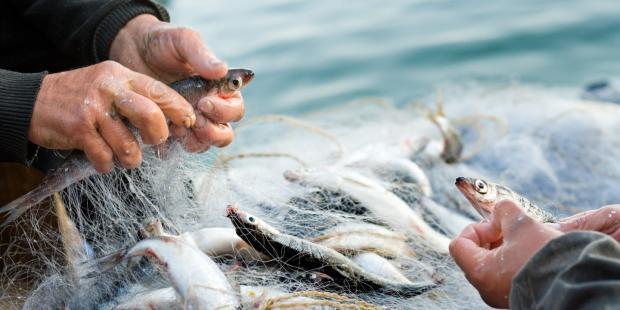 世贸组织渔业补贴改革恐破坏其声誉