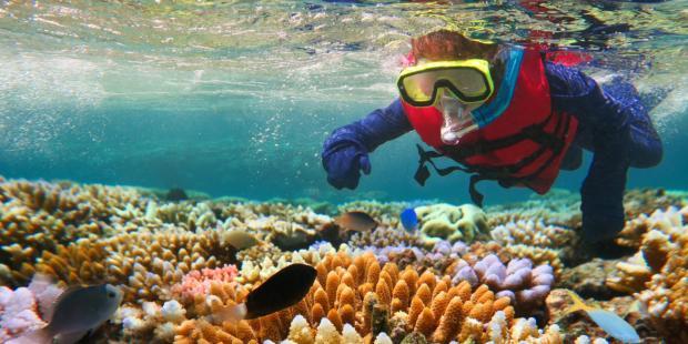 珊瑚修复利弊几何?