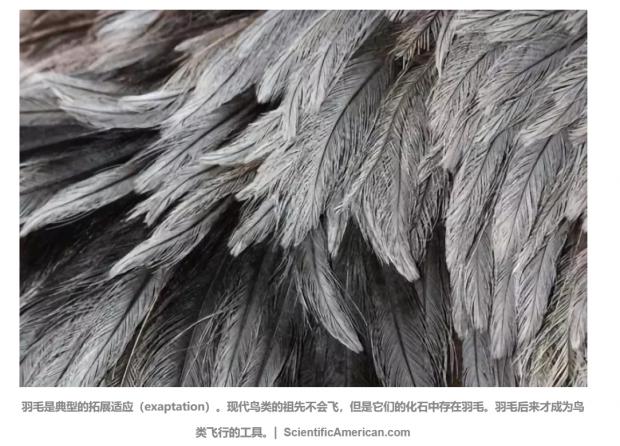 """始祖鸟不会飞为什么长羽毛?看似无用的""""适应""""才是进化动力"""