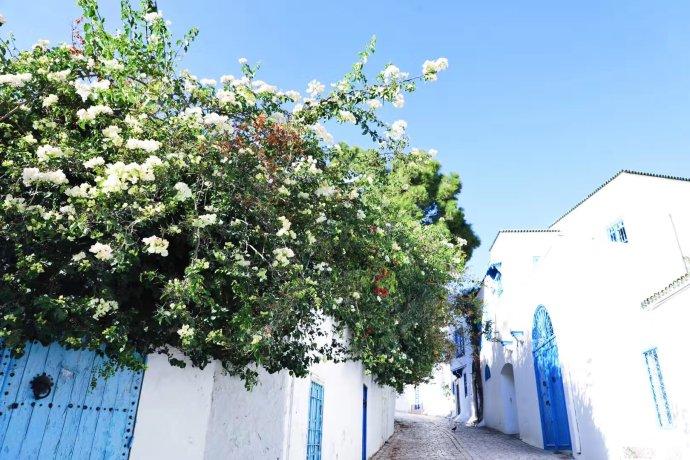 蓝红突尼斯,在地中海与撒哈拉之间