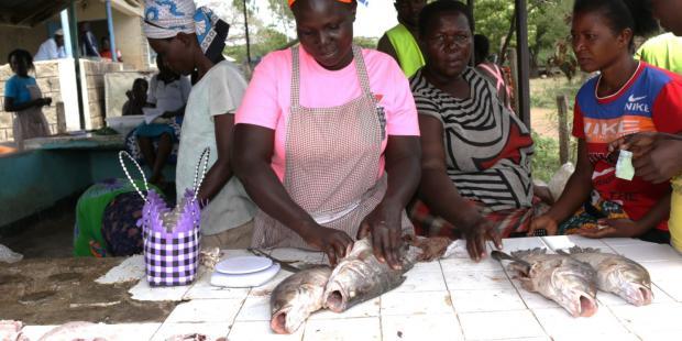 东非过度捕捞问题威胁尼罗河鲈鱼的生存