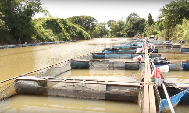 重蹈覆辙的泰国淡水渔场