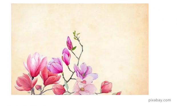 林凤生:美的观念是如何形成的?