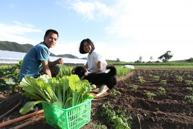电商将带来中国有机农业的春天吗?