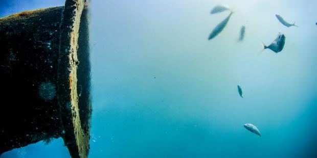 废弃的盐水:生态问题还是经济机遇?