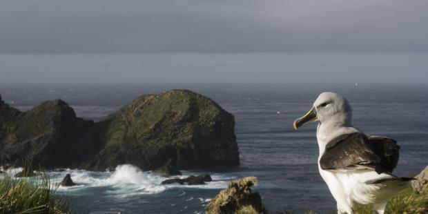 【组图】全新亮相的智利海洋公园