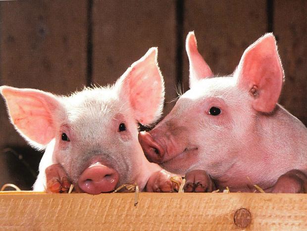 猪年少吃肉?重新想象中国的菜单