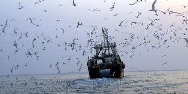 加纳:暗访视频揭露大量弃置渔获