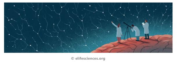 Science评论:人工智能需要真实的生物大脑机制吗?