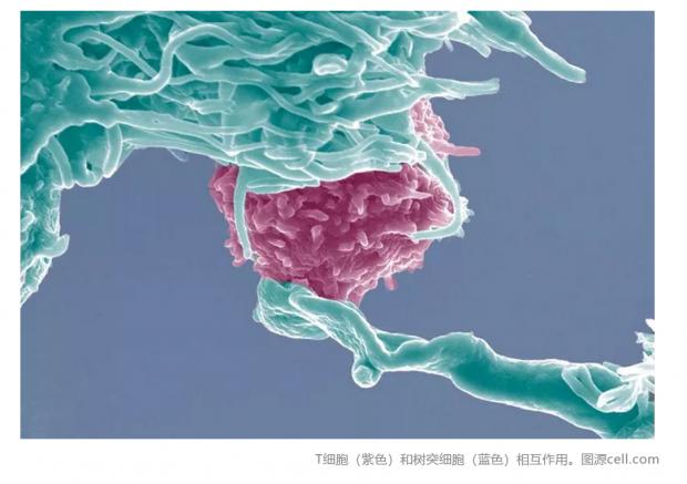 追根溯源:为何T淋巴细胞不能有效杀伤肿瘤细胞?