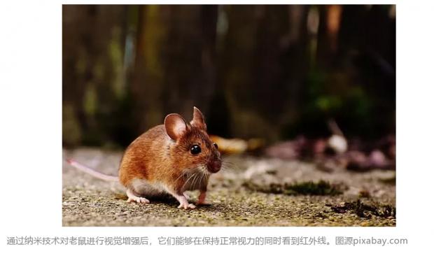 视觉增强来了:新型纳米材料让小鼠看到红外线