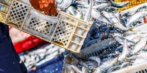 全球变暖或重创中国东海渔业
