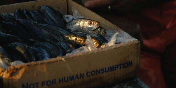 肯尼亚呼吁加强对市场鱼产品的监管