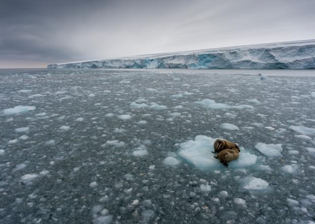 北极冰层融化导致碳释放