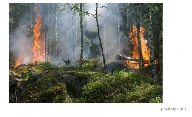 分析|森林大火是如何蔓延的?