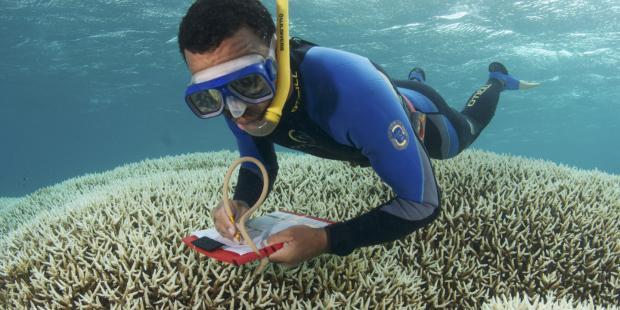 """大卫·奥布拉:""""拯救珊瑚礁,我们做的还不够"""""""