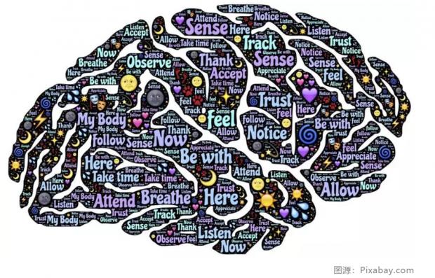 争议刷屏:脑的死亡到底是什么?