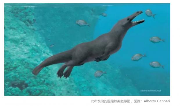 鲸的祖先来自陆地?科学家发现了远古的四足鲸