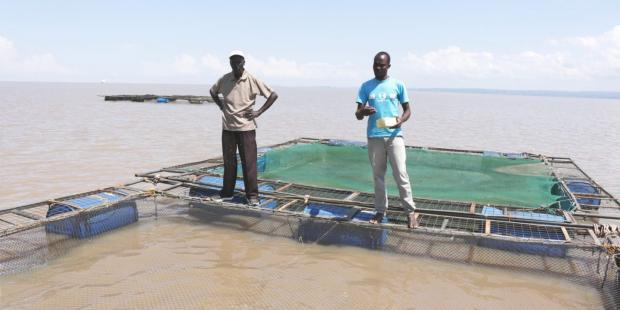 水产养殖能否满足东非市场需求?