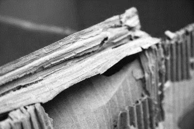 做空实录01: 东方纸业,浑水诞生首战