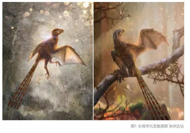 《自然》封面:没有成为鸟的神秘飞行者