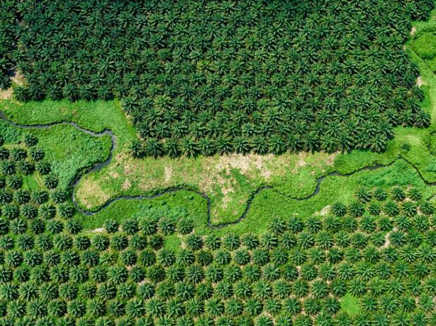圆桌讨论:如何解决全球生物多样性丧失的问题?