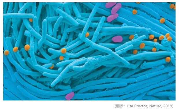 微生物,大影响:iHMP最新研究进展